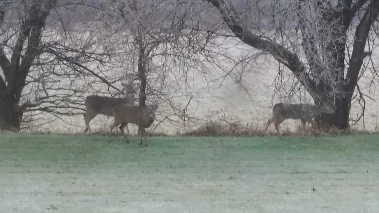 Deer in an Icy Field - Pete Zylstra via Facebook.jpg