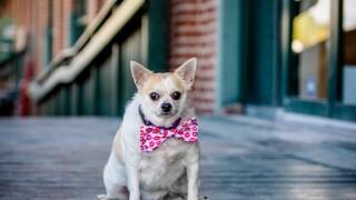 Pet of the week Seeley dog.jpg