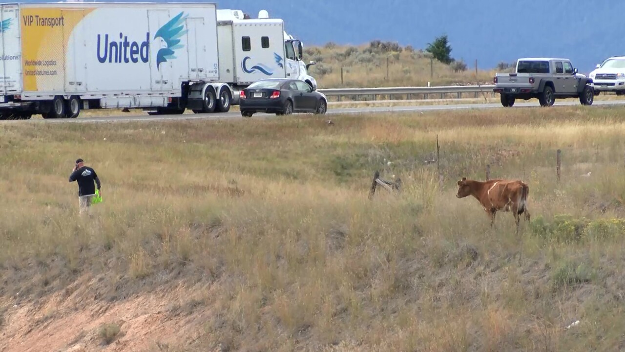 Cattle truck crash near Butte triggers animal-rights group