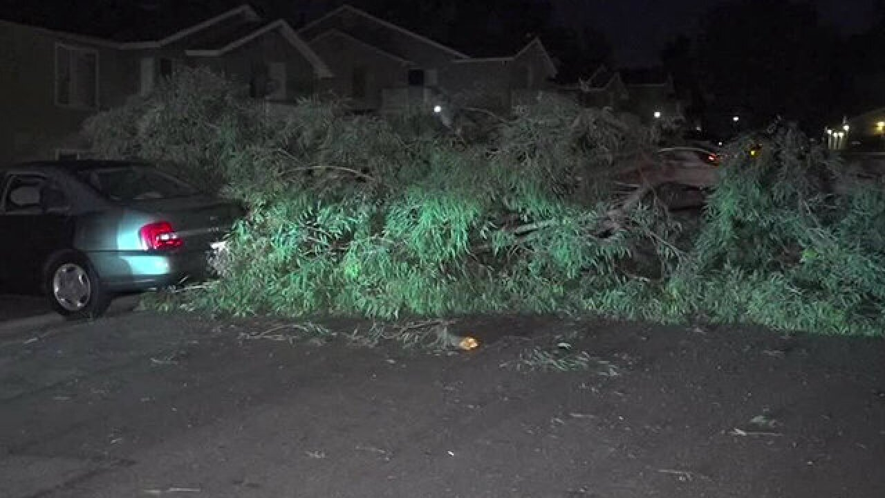 Tree falls at apartment complex, damages carport