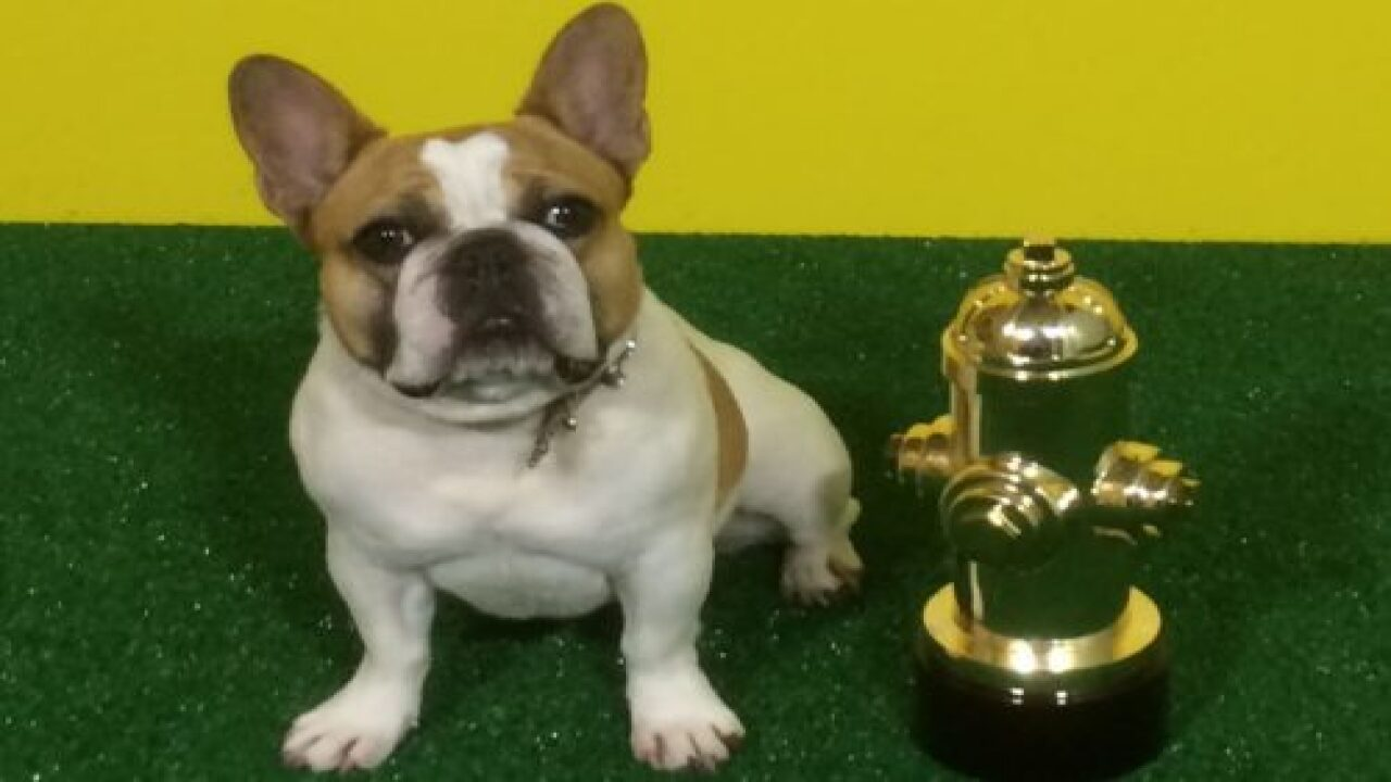 French Bulldog From 'Modern Family' Died After Shooting Series Finale