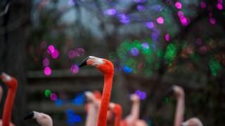 Flamingos wLights2-Erik Markov.jpg