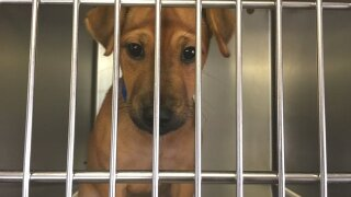 The Humane Society of Tulsa stepping in to help as Tulsa Animal Welfare struggles with overcrowding