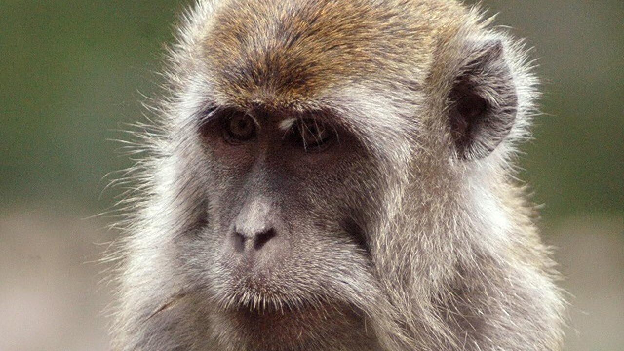 More monkeys coming to Indy Zoo