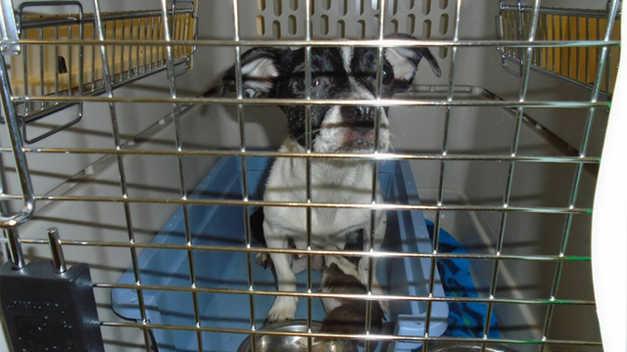 24 dogs found in home covered in feces, urine