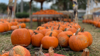Pumpkin patch at Seminole Heights United Methodist Church.