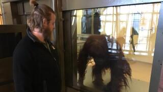 Hiring Hoosiers - Indianapolis Zoo.JPG
