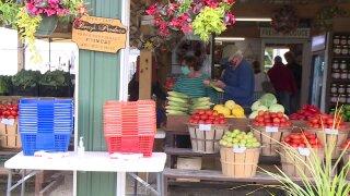 Farmers market Gabby.jpeg