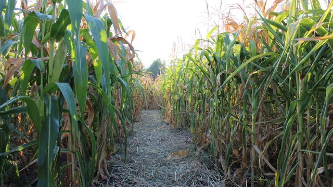 5 awesome corn mazes to visit in central Indiana this fall