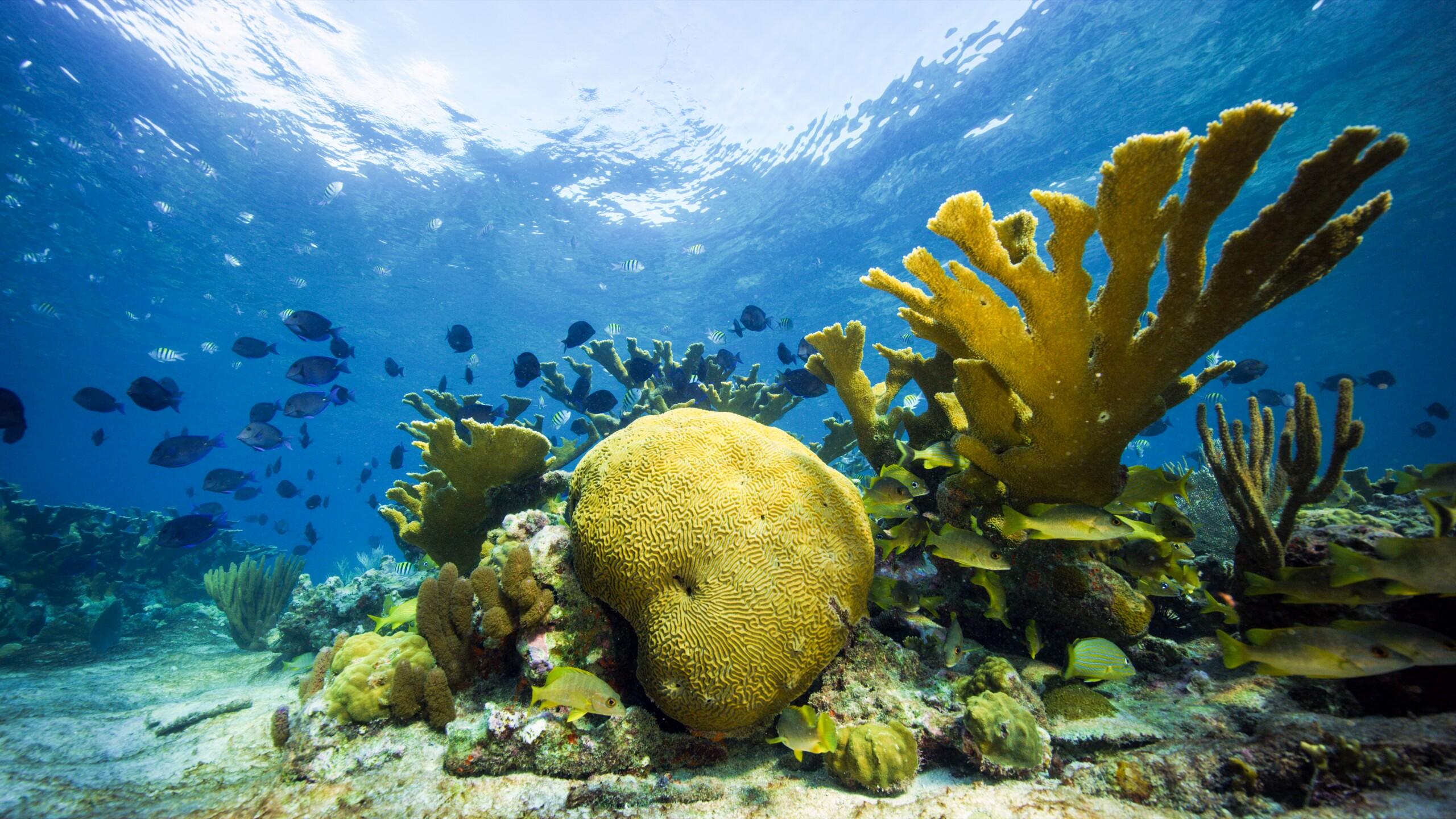 Cuba reef