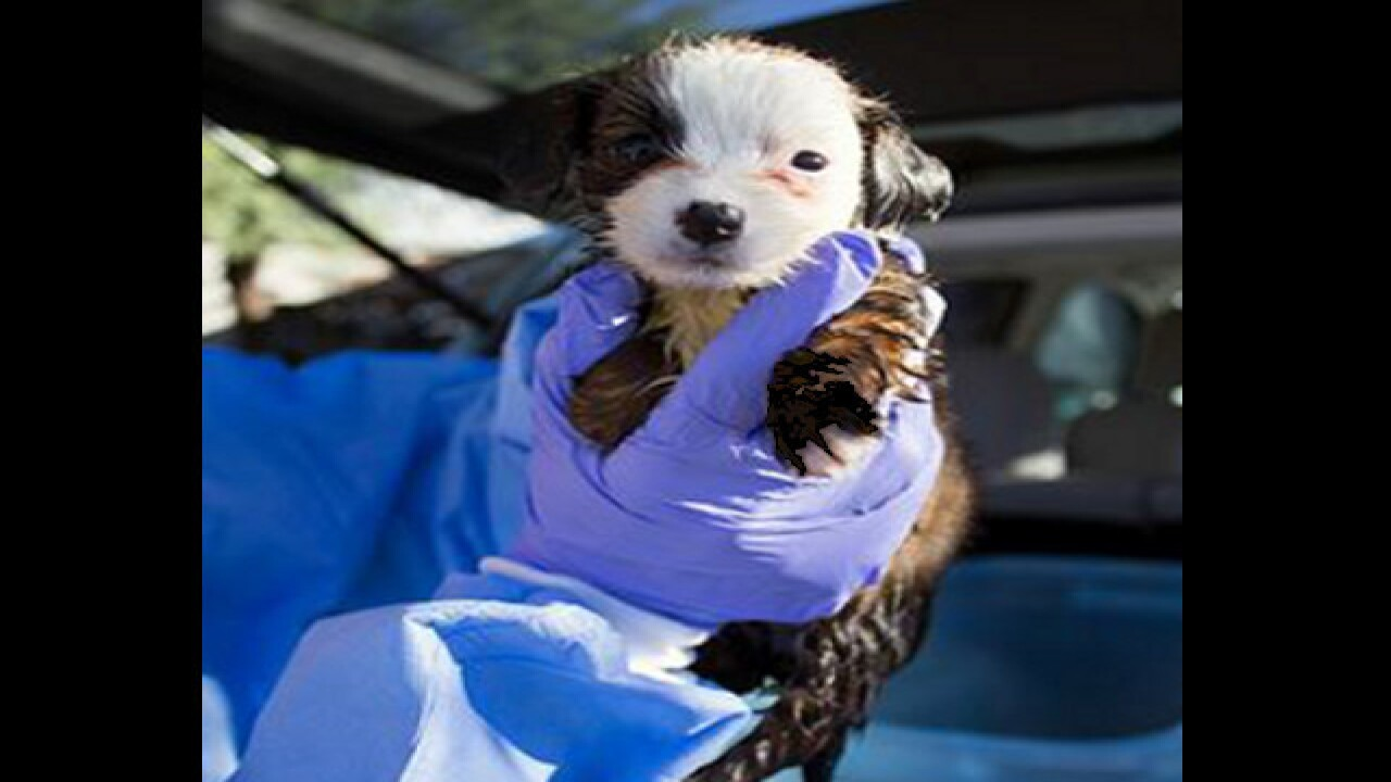 Nine puppies found abandoned at Tucson mall