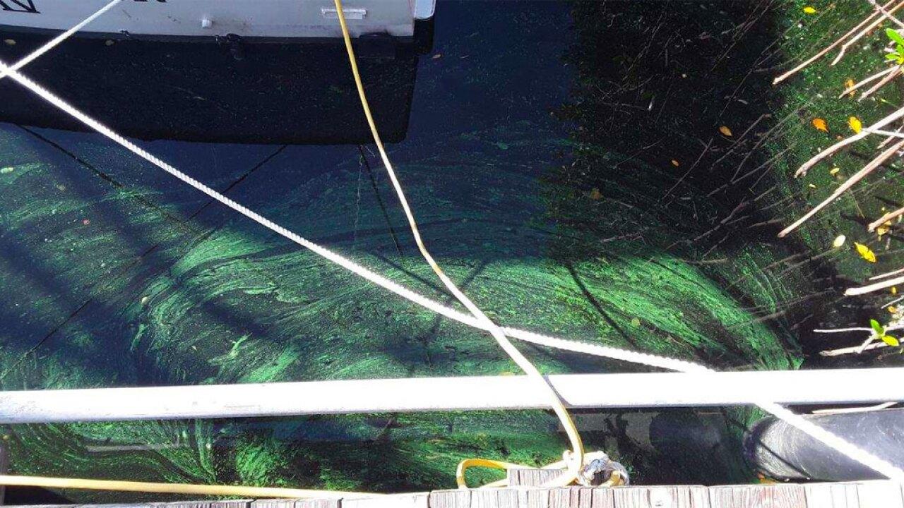 wptv-algae-harbor-.jpg