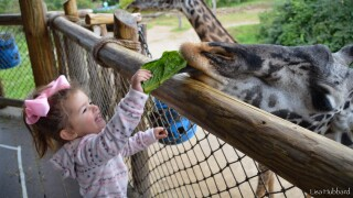 Zoo file photo