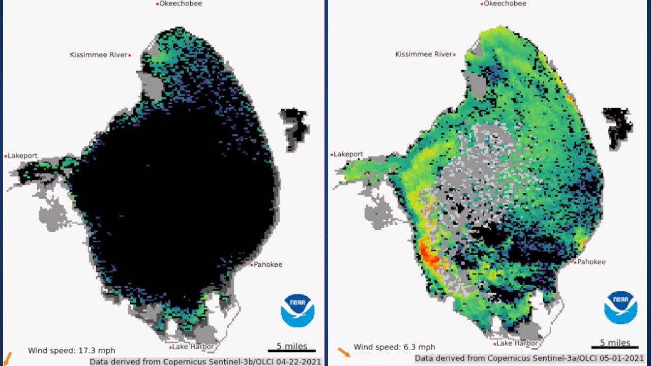 Algae levels on Lake Okeechobee on April 22 and May 1, 2021 from NOAA satellites