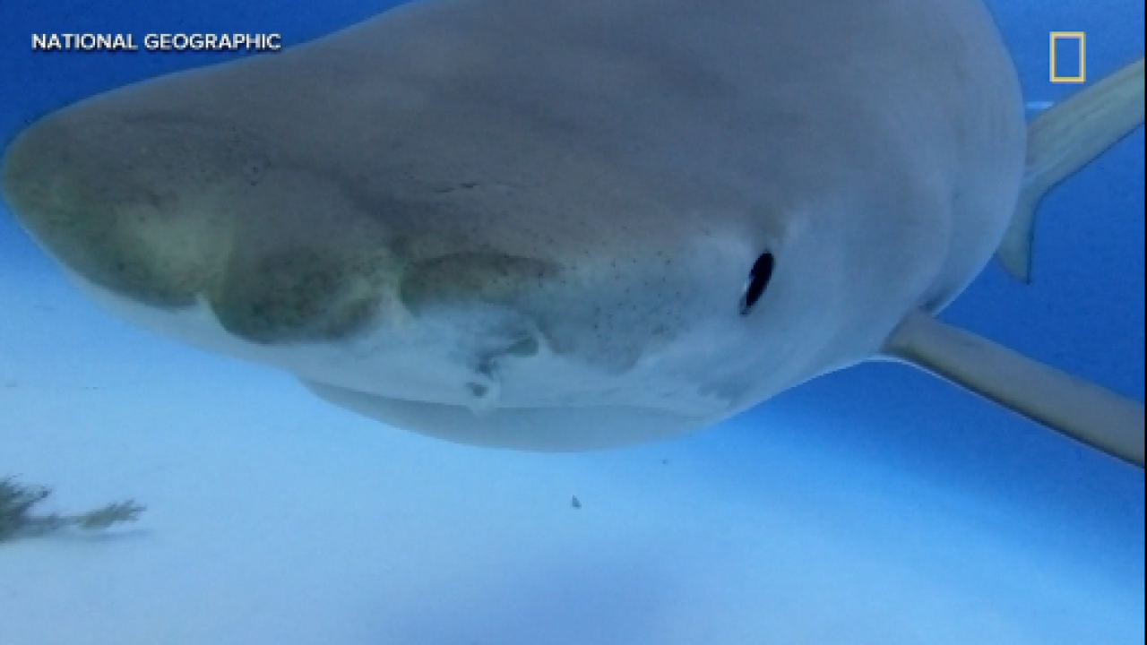 Two researchers say weather could predict shark attacks