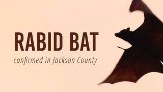 Rabid bat Jackson County.jpg