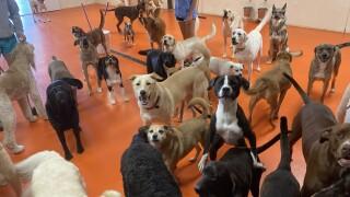 Sit & Stay Pet Resort