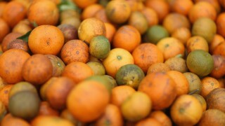 Citrus Greening Diseases Threatens Florida's Orange Industry