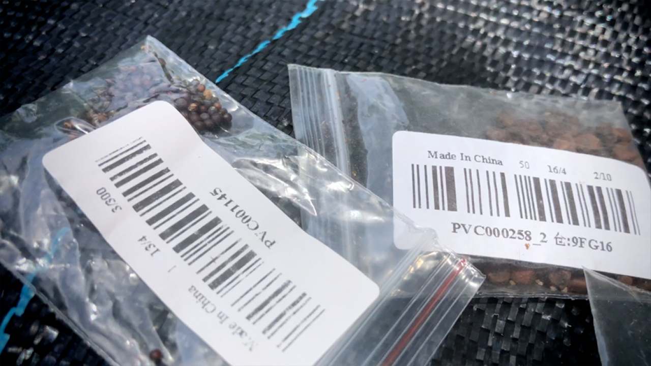 mystery-seeds-from-china1.png