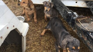 rescued_pups.jpg