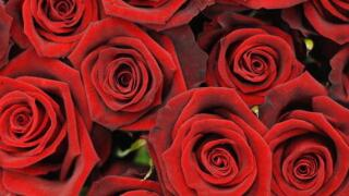 Man surprises wife with hundreds of roses on her final day of chemo