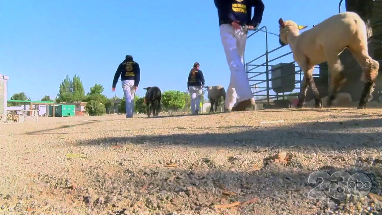 Kern County Fair Livestock Show