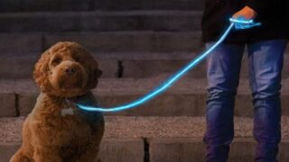 Light-up Leash Makes Late-night Dog-walking Safer