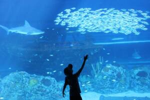 Texas State Aquarium celebrates Earth Day with Beach Cleanup, Party for the Planet