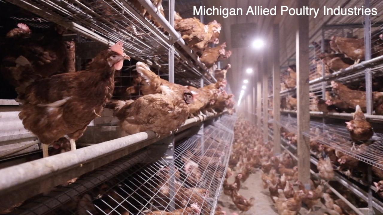 Egg farms prepare for new 2025 cage-free law