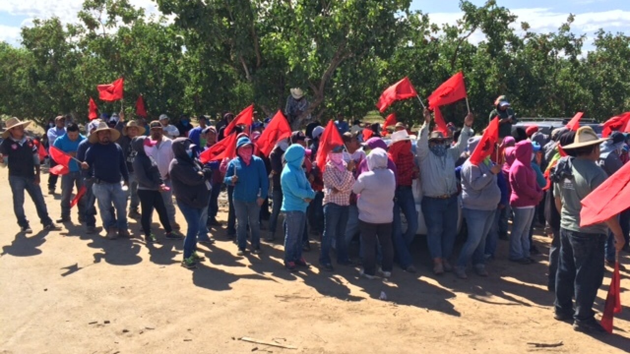 UFW Protest takes over Kyte Avenue