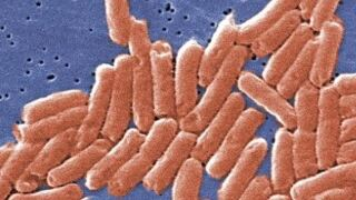Idahoan sickened by salmonella outbreak linked to ground beef