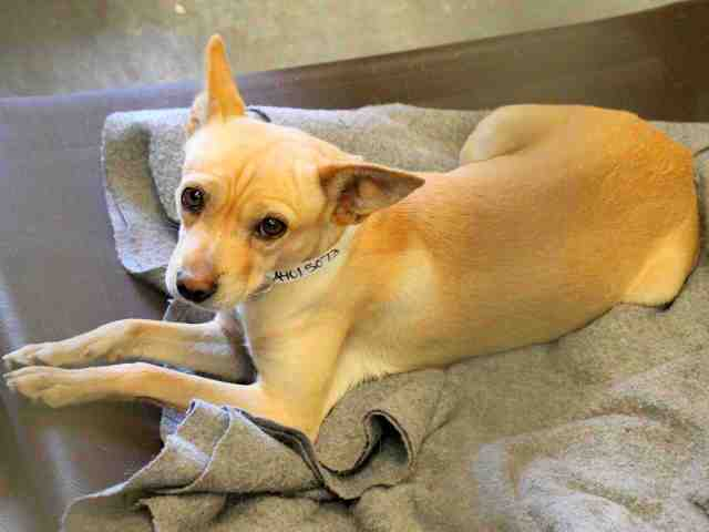 Adoptable pets from Arizona Humane Society and Maricopa County Animal Care and Control (1/31)