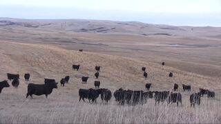 Montana Ag Network: Ag lender offers cautious optimism for new year