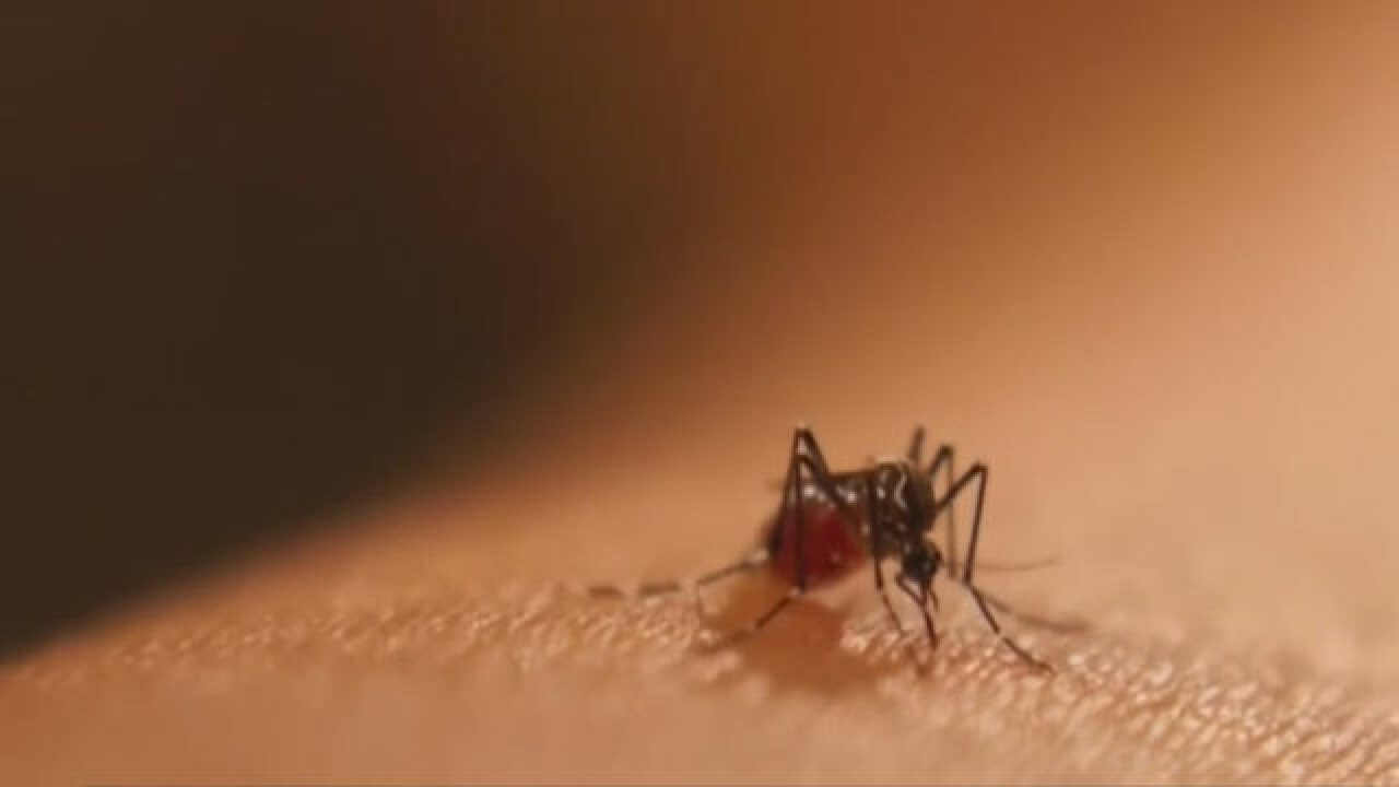 3 Nashville Batches Of Mosquitoes Test Positive For West Nile Virus
