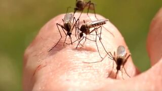 West Nile Virus reported in three Montana counties
