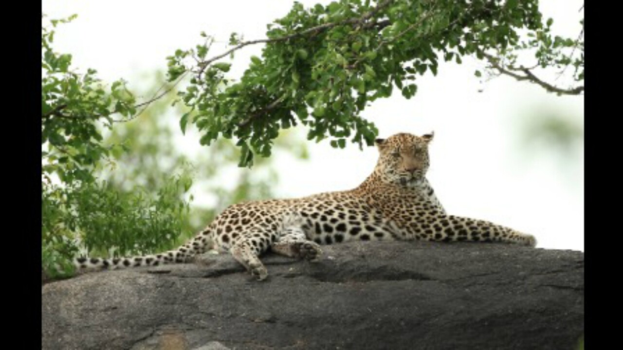 Leopard kills 2-year-old boy in Kruger National Park