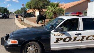 Tucson Police bull 1.jpg