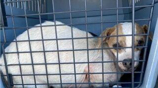 abandoned dog.jpg