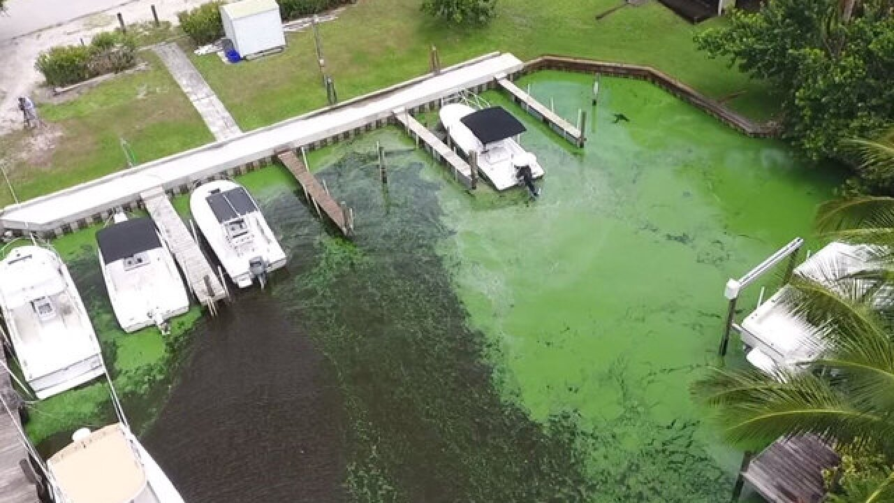 Small business owners say algae relief plans are not enough