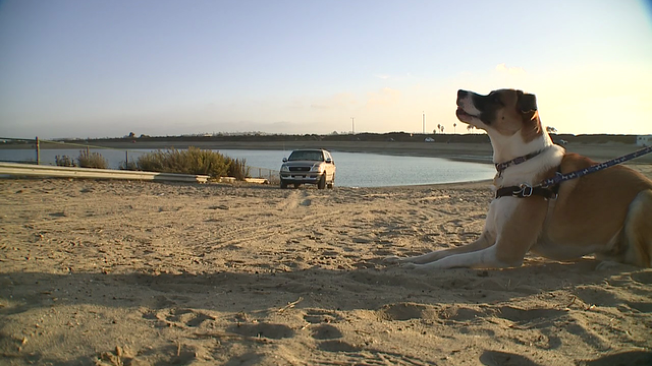 Woman says dog poisoned at Fiesta Island