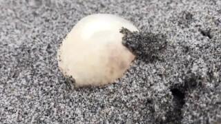 wptv-turtle-egg.jpg