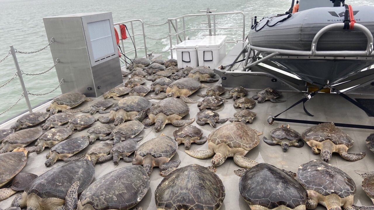 Texas sea turtles.jpg