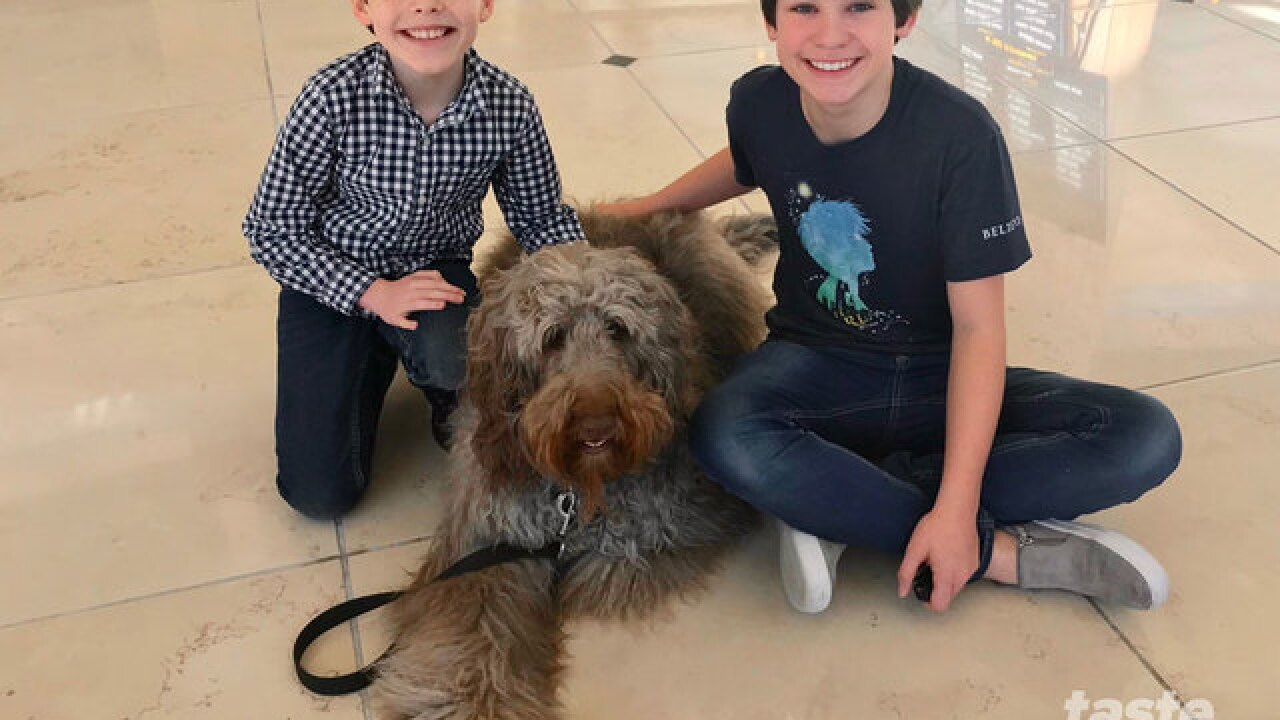 Cutest dog ever stars in Kravis Center show called Finding Neverland