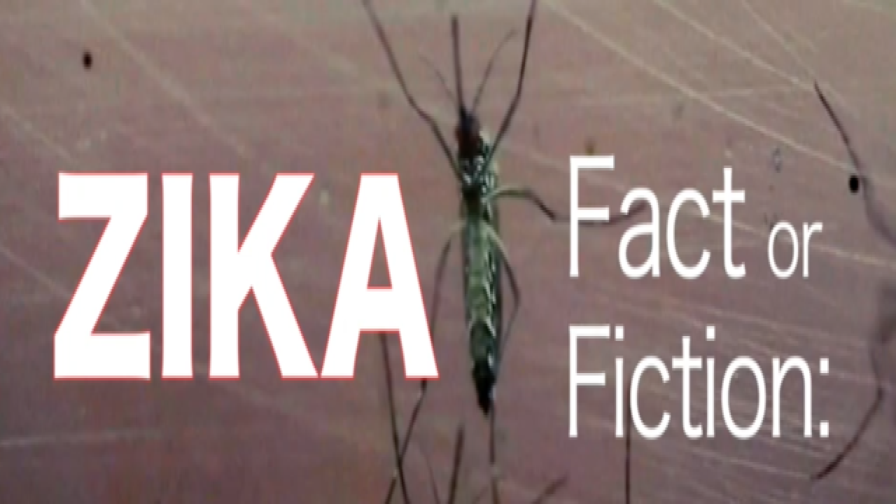 Zika virus fact and fiction detailed