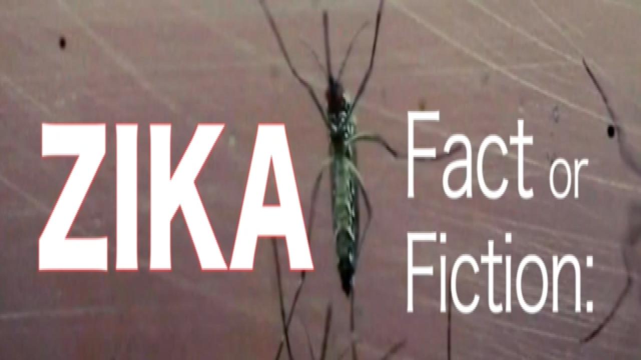 Zika virus fact and fiction detailed