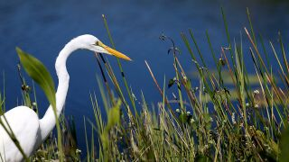 Everglades National Park Reopens After Being Shuttered By Gov't Impasse