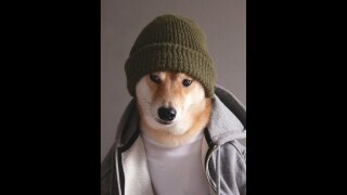 Photos: Menswear Dog offers men fashion advice