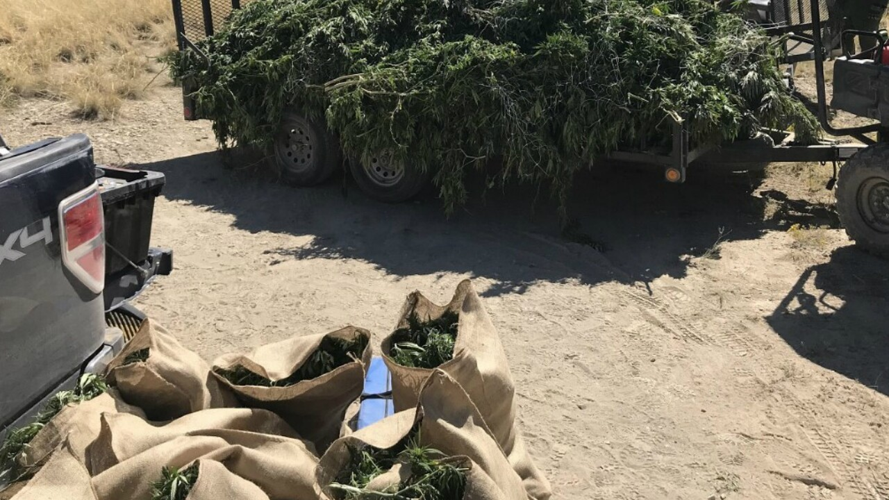 Las Animas County Illegal Marijuana Grow Bust