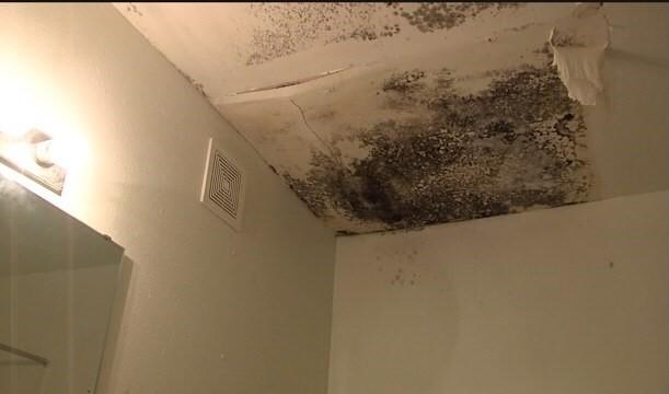 mold ceiling.jpg