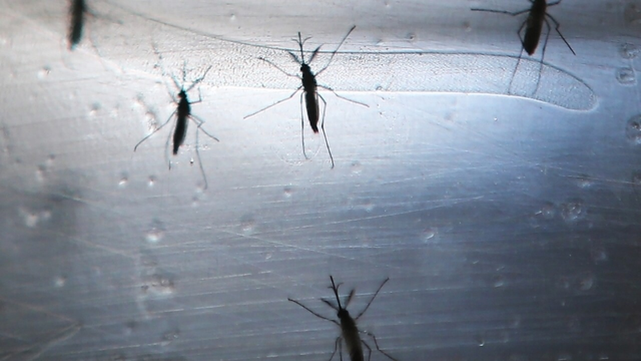 Students in Zika zone can't use repellant